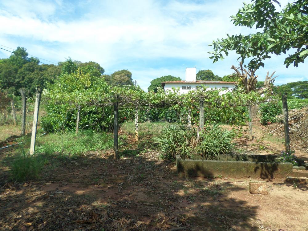 Alugar Rurais / Chácaras em São José do Rio Pardo apenas R$ 3.500,00 - Foto 40