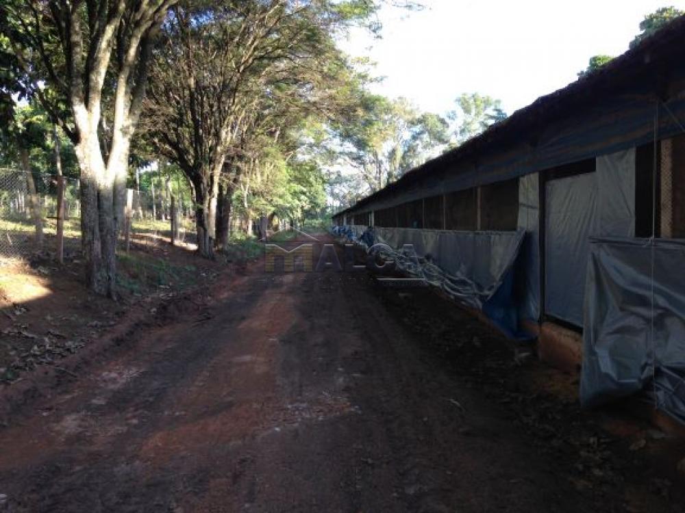Comprar Rurais / Sitios em Itobi apenas R$ 1.270.290,00 - Foto 3