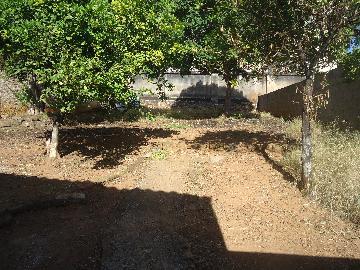 Alugar Casas / Padrão em São José do Rio Pardo R$ 800,00 - Foto 14